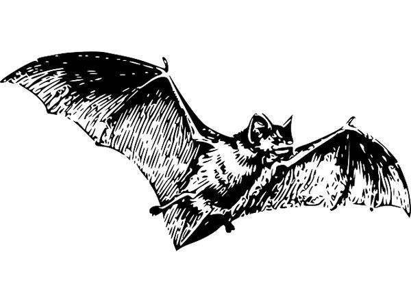 Vleermuizen-15