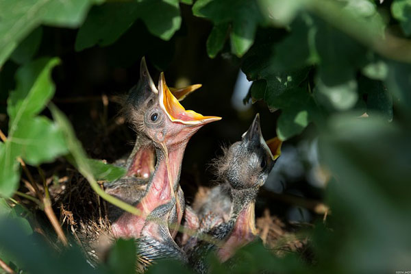 baby-vogels-18