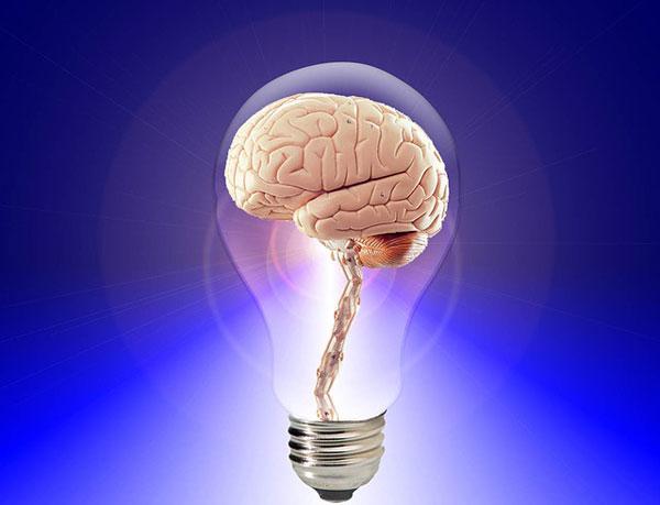 hersenen-17
