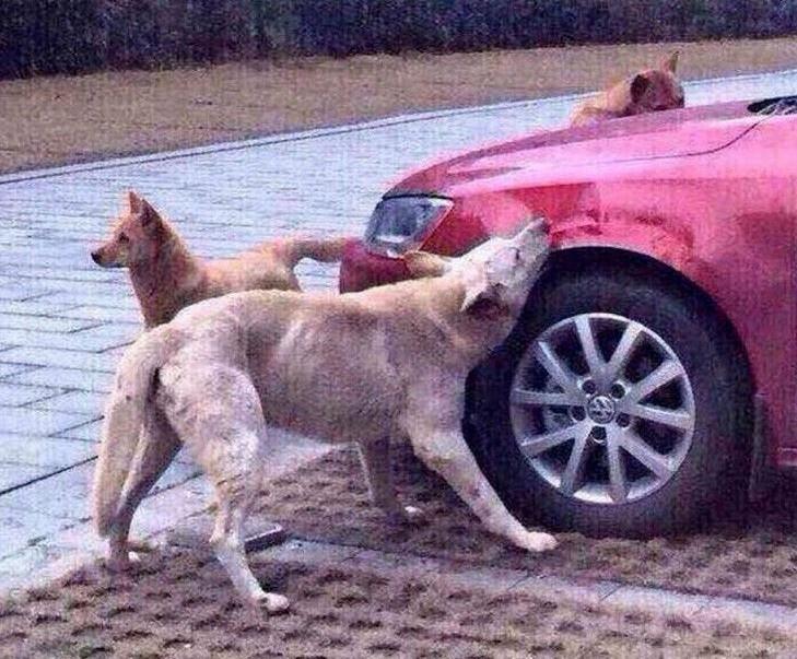 Automobilist schopt hond, maar hond neemt op onverwachte wijze wraak