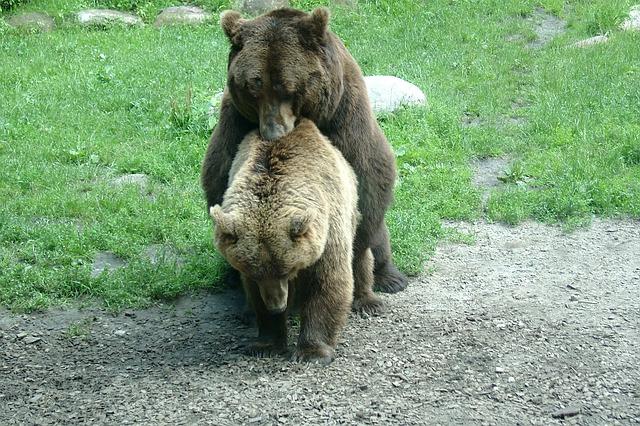 bear-255597_640
